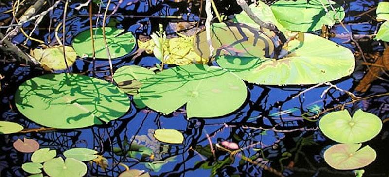 Lily Pond, Evening Shadows