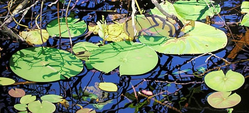 Lily Pond, Evening Shadows Image 1