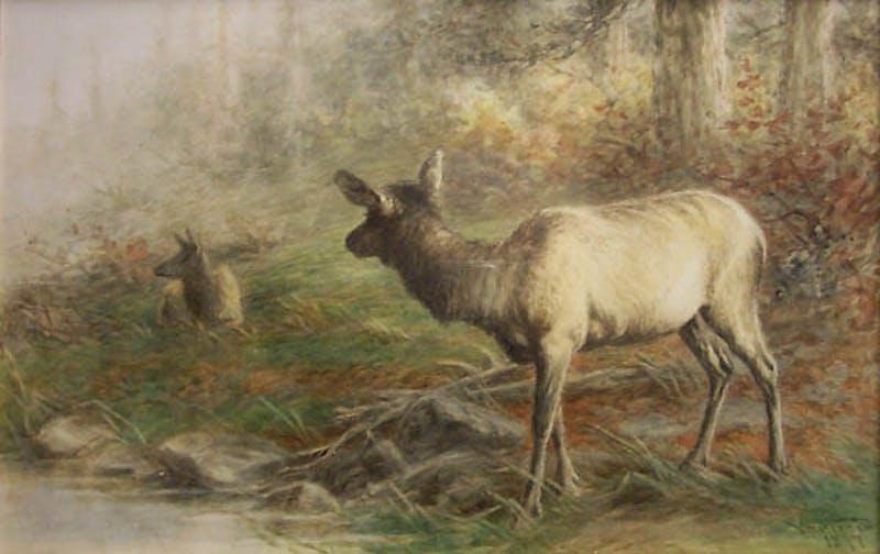 Elk at Water's Edge Image 1