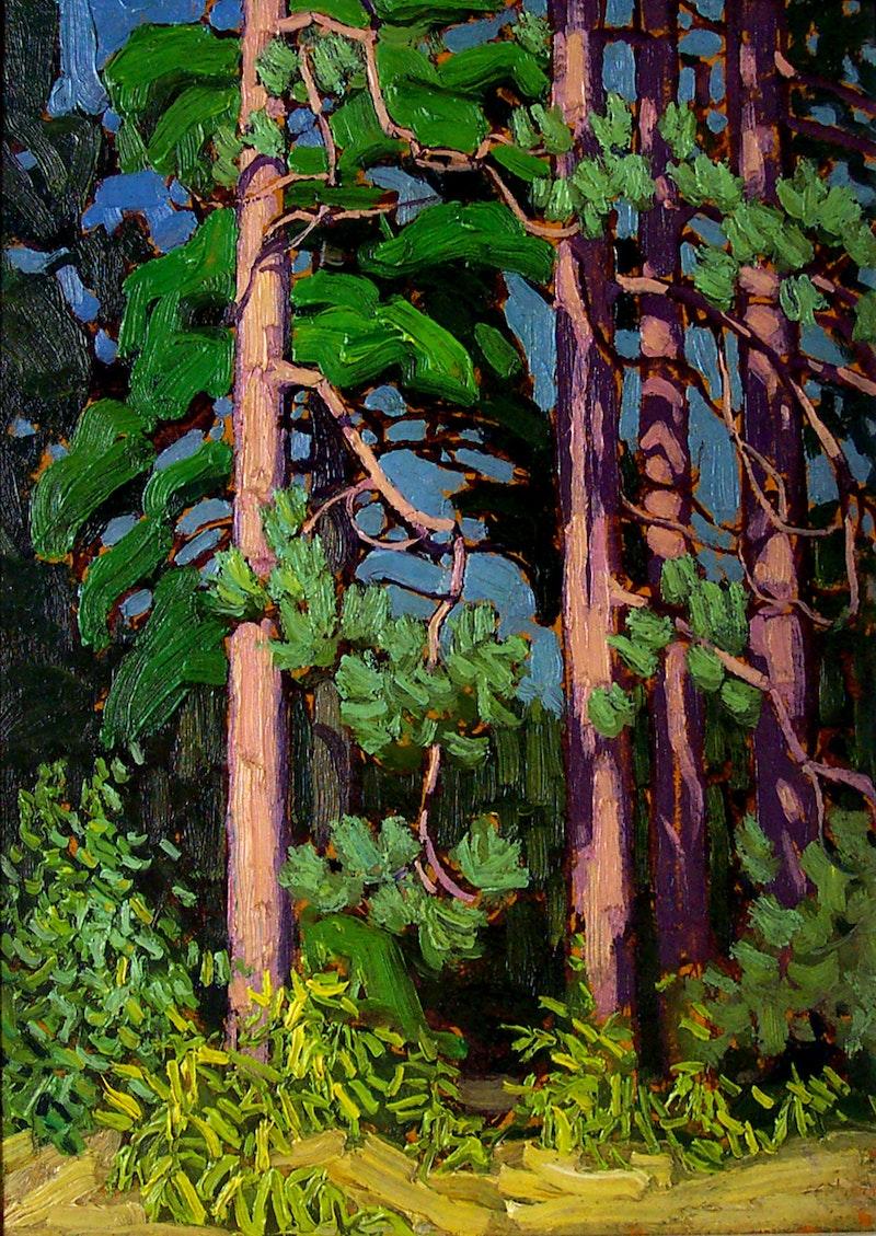 Trees, Algonquin Park Image 1