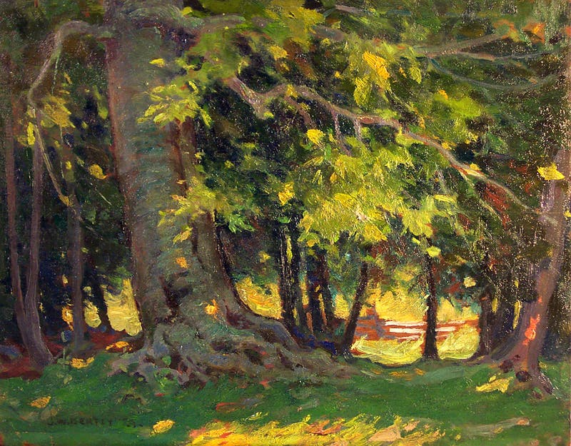 Forest Scene