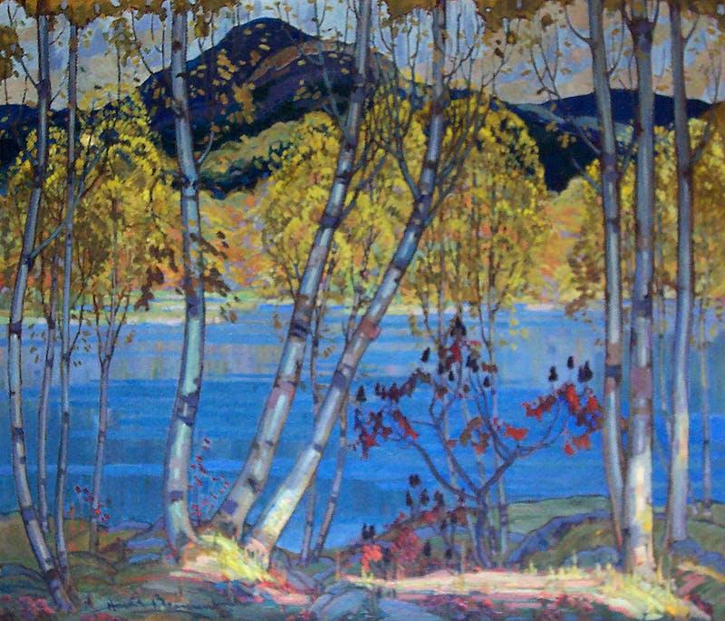 Birch Trees Image 1