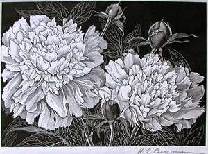 (Untitled) Peonies