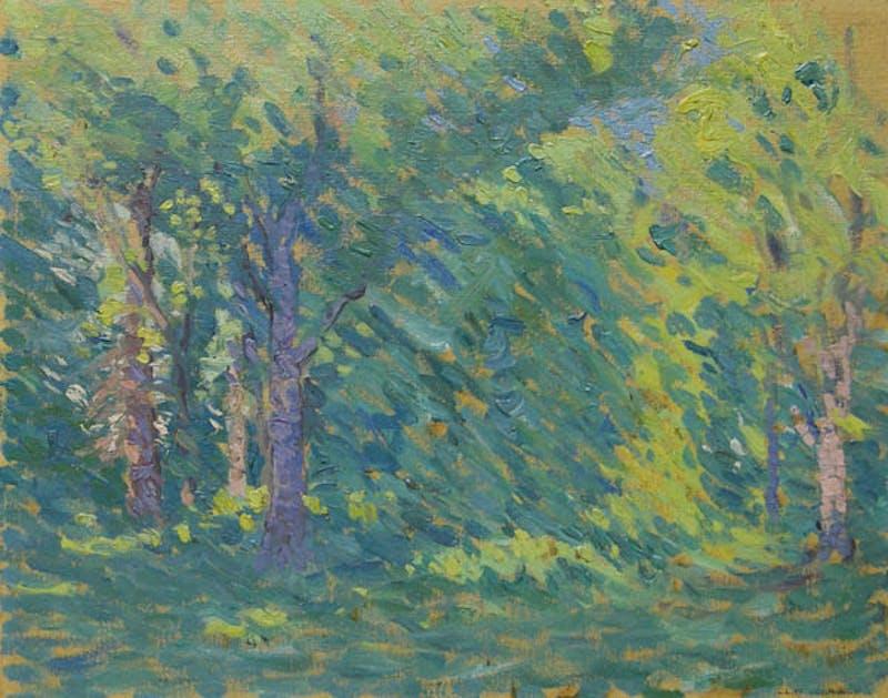 Summer Forest Image 1