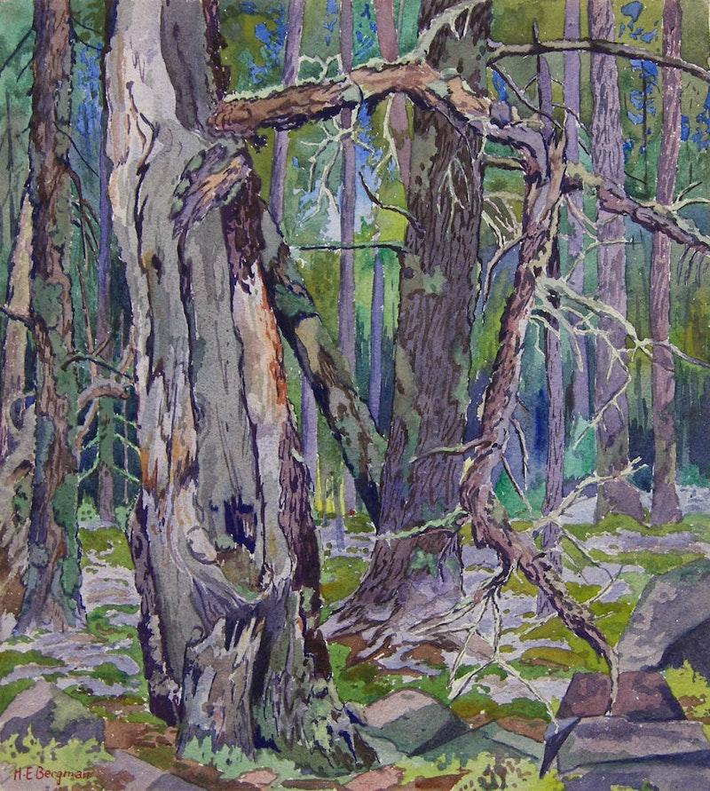Whiteshell Landscape - Forest Scene Image 1
