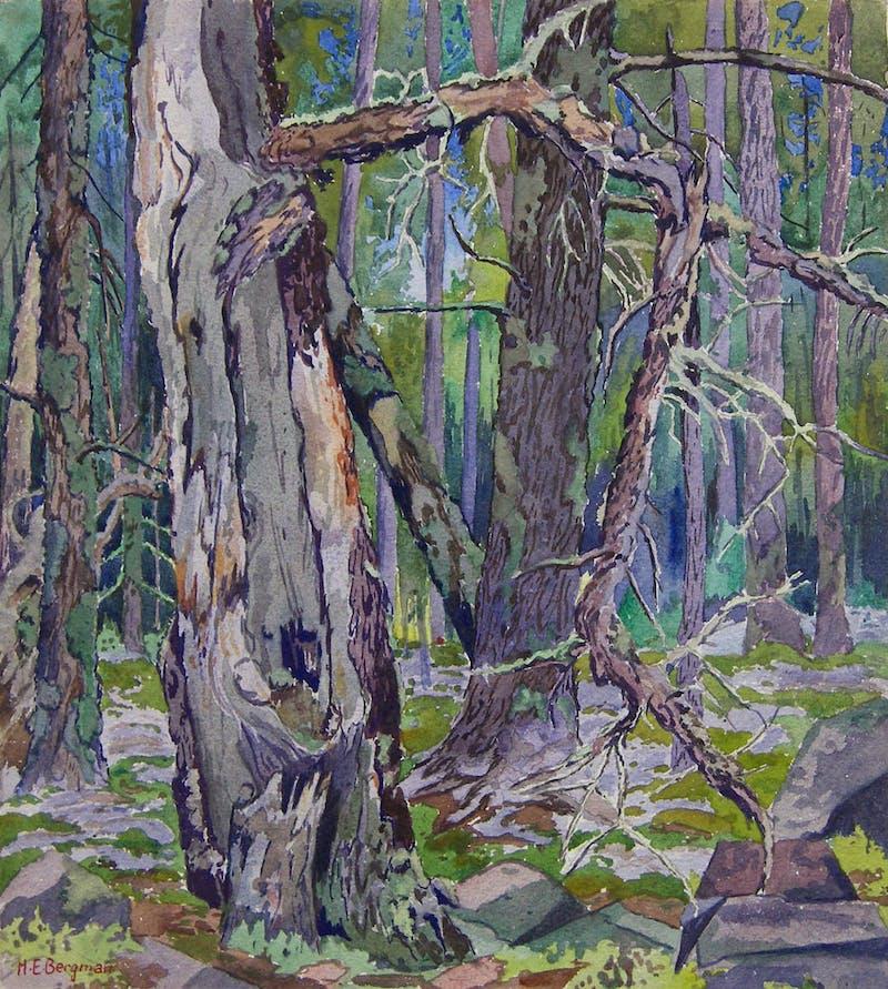 Whiteshell Landscape - Forest Scene