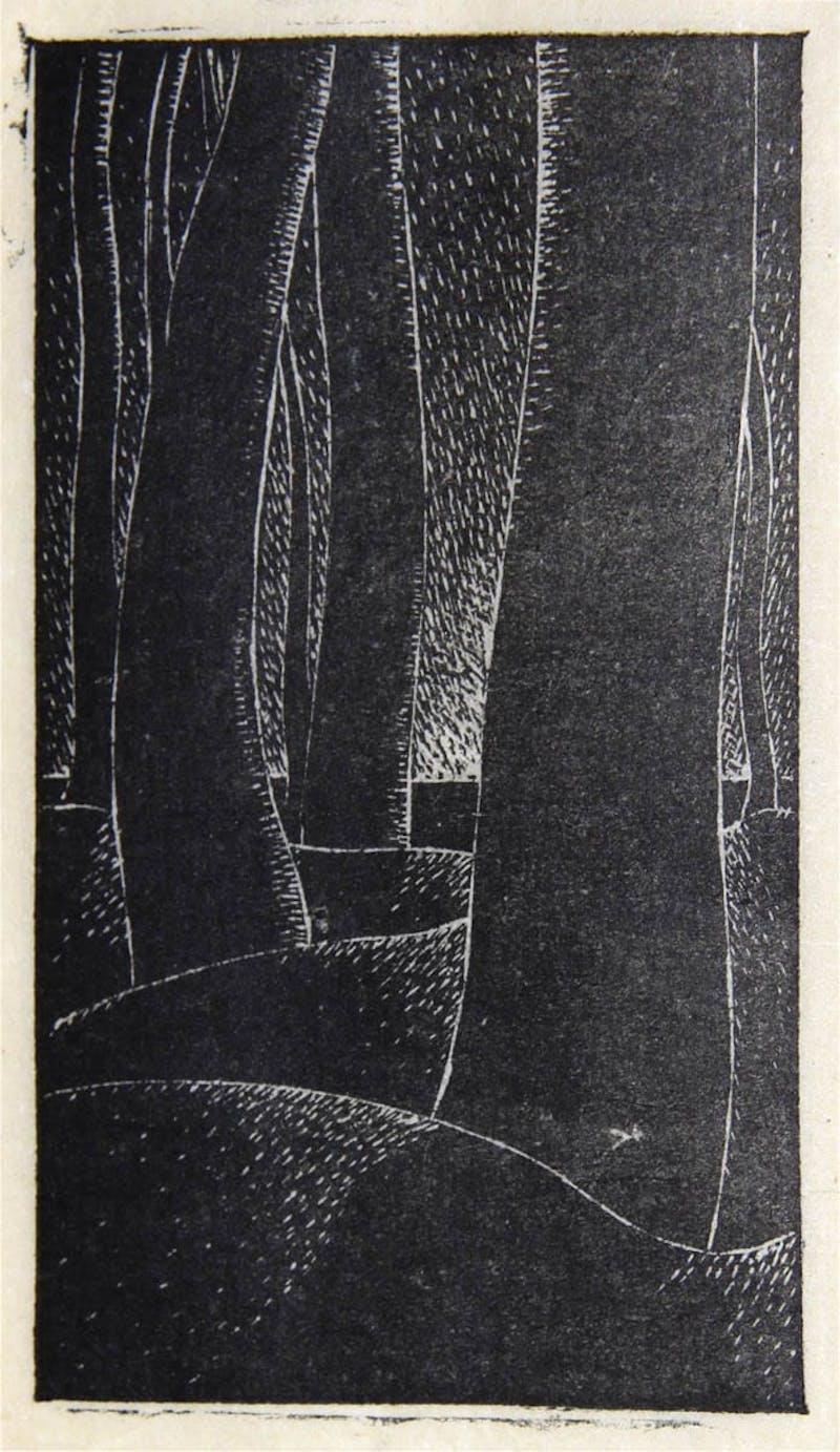 Tree Trunks Image 1