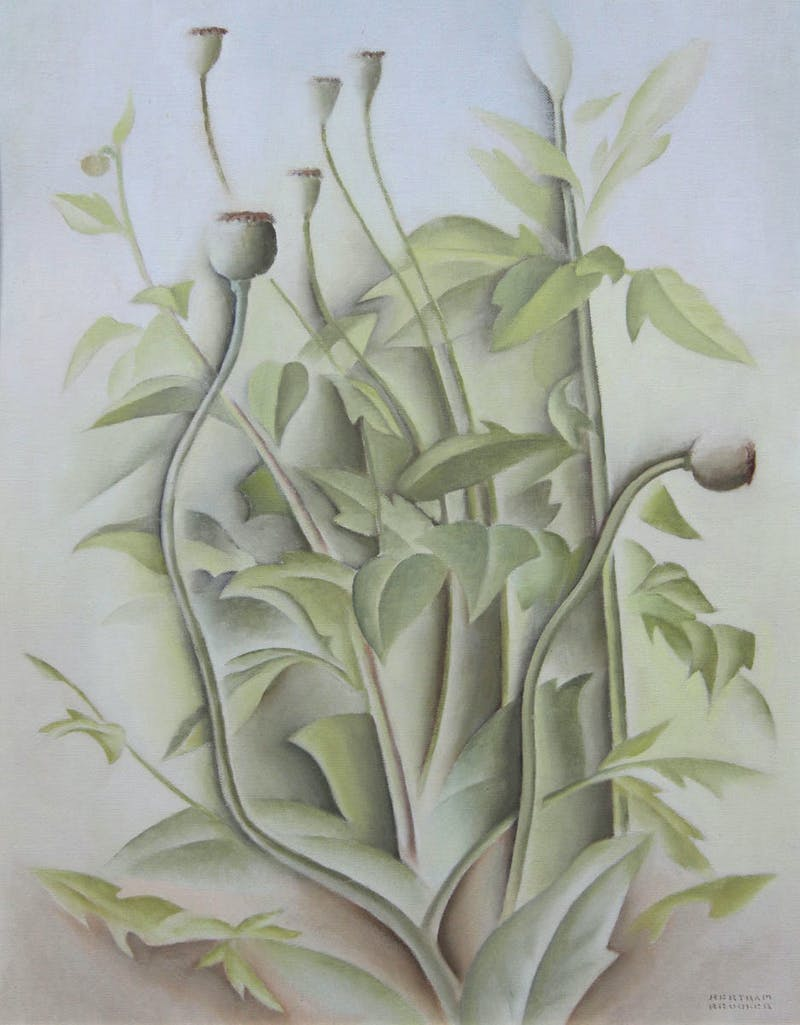 Poppy Seeds Image 1