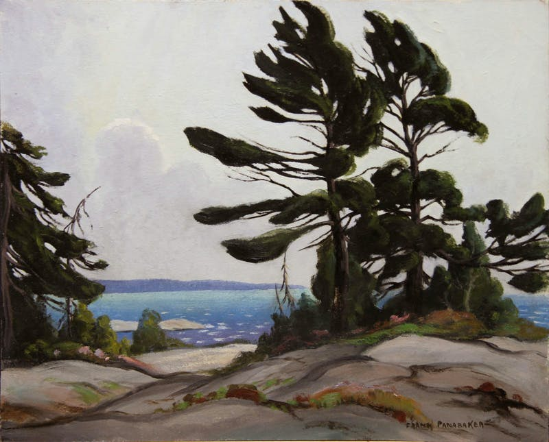 Wind Blown Pine, Georgian Bay Image 1