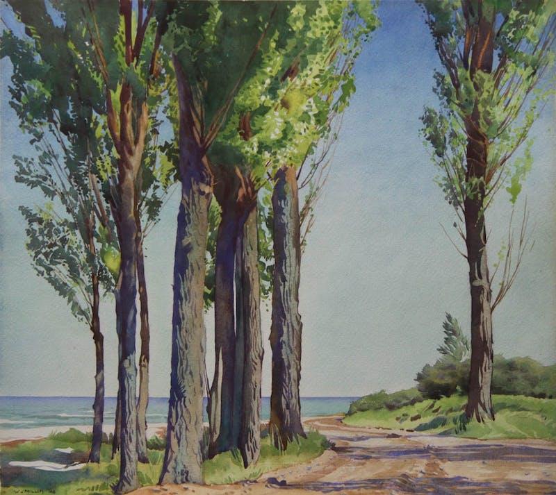 Cottonwood Trees, Lake Okanagan Image 1