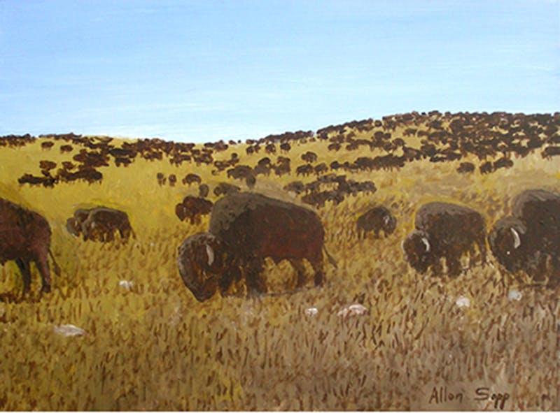 Buffalo are Grazing Image 1