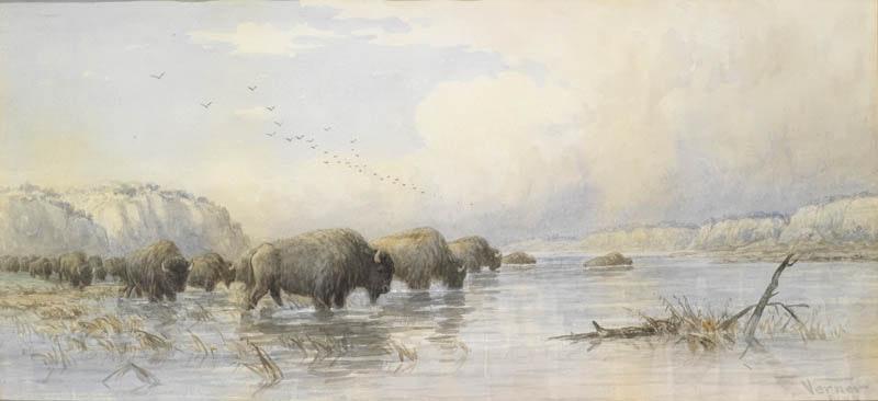 Herd of Buffalo Watering Image 1