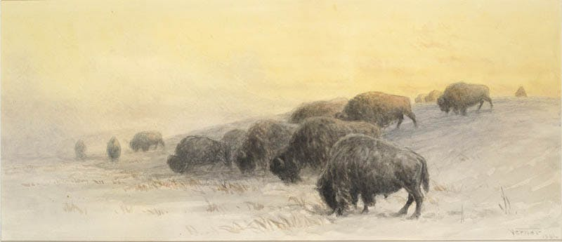 Winter Buffalo Image 1
