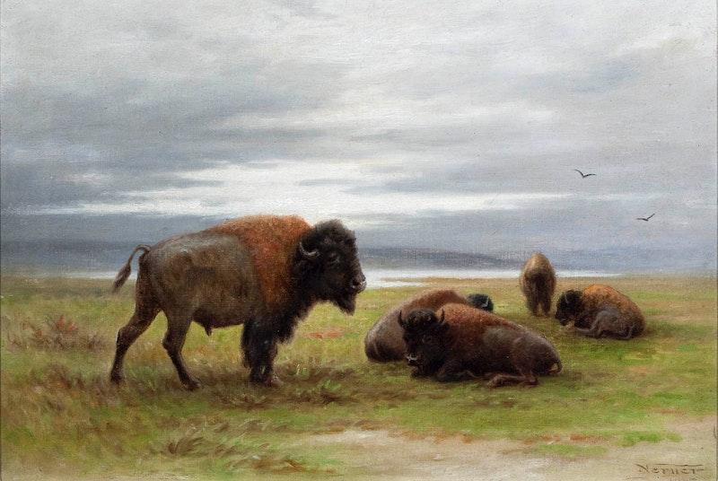 Buffalo on the Prairies