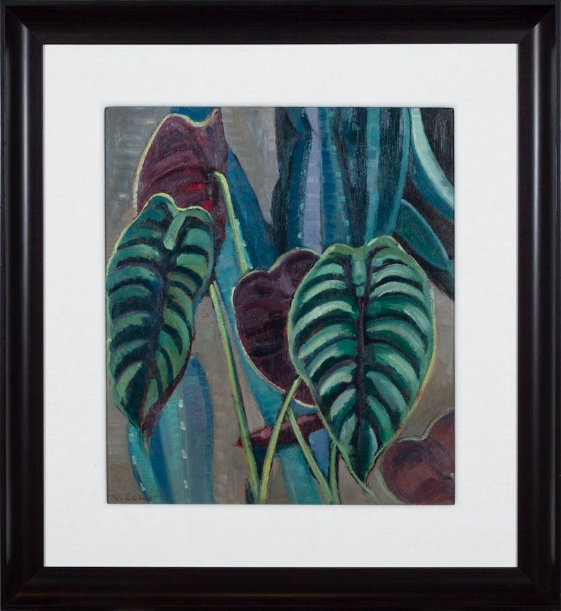 Philodendron Image 2