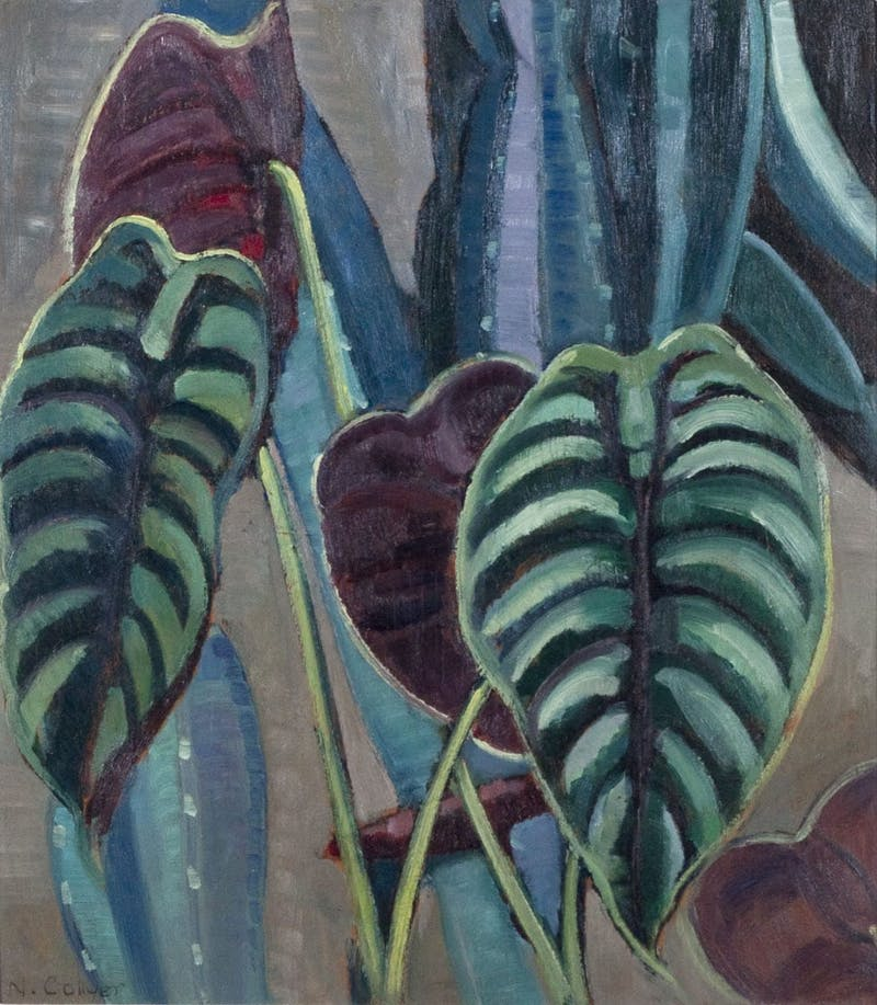 Philodendron Image 1