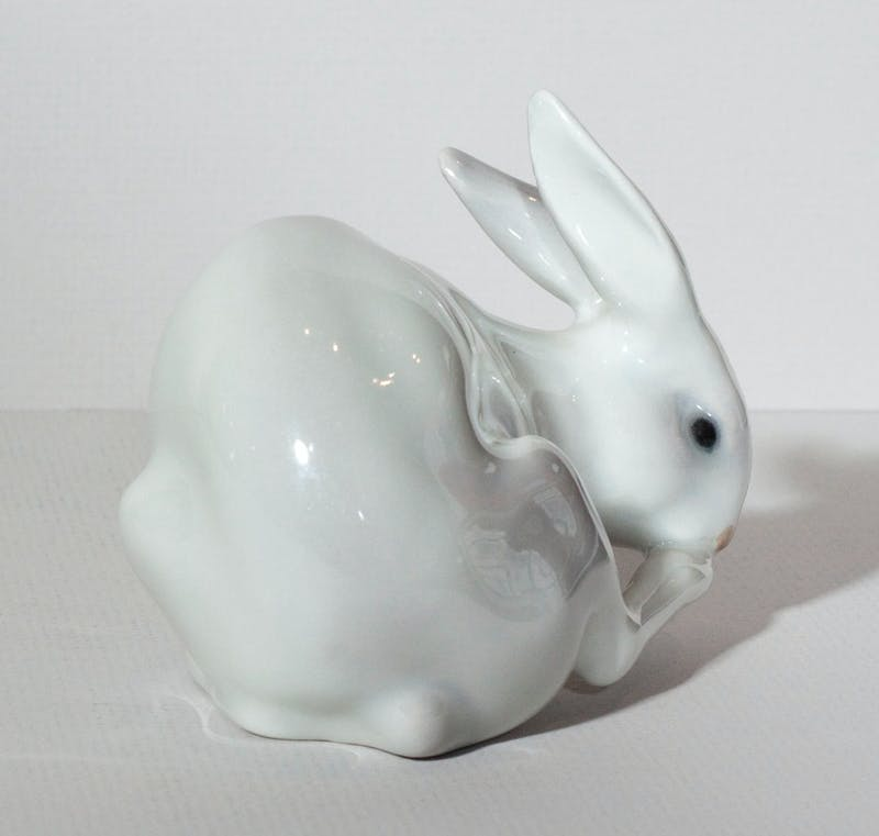 Rabbit Bathing Image 2