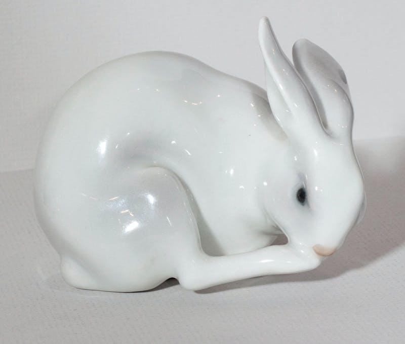 Rabbit Bathing Image 1
