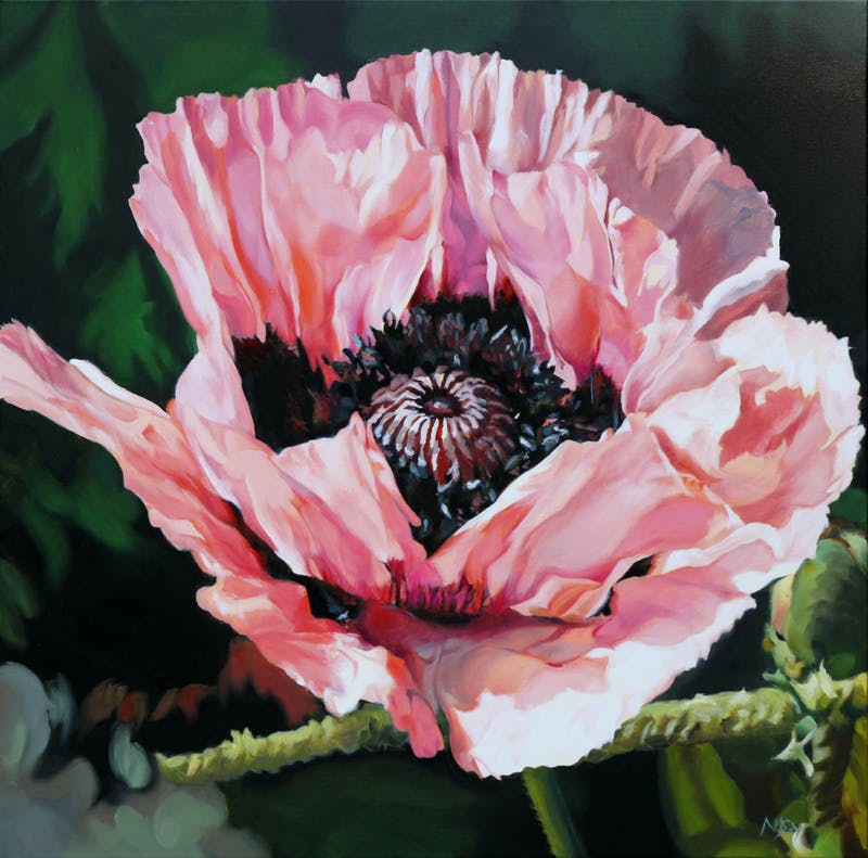 Pink Poppy Image 1