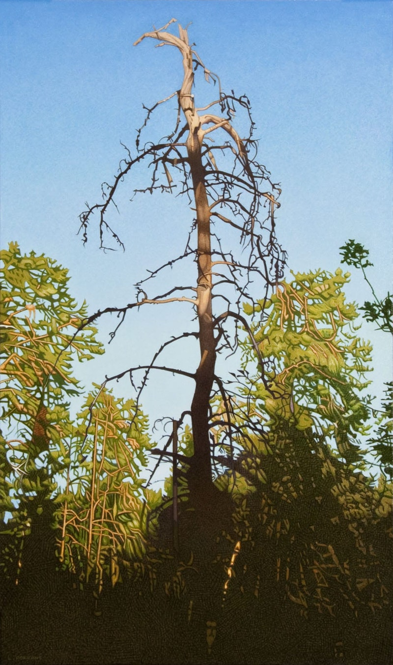 Sentinel- Amisk Trail Head, Inverness Falls