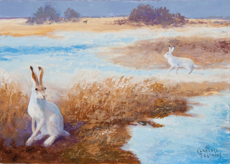 Jack Rabbits Alert to Distant Coyote Image 1