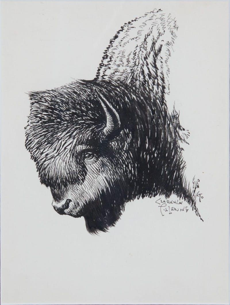 Bison Head Image 1