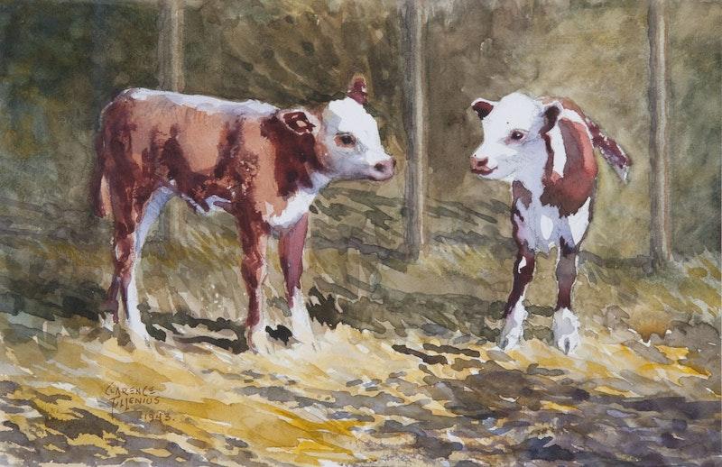 Calves on Homestead