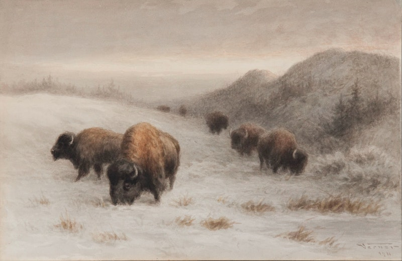 Buffalo Grazing on a Hillside