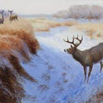 White Tailed Deer in the Snowy Marsh by Clarence Tillenius, 1995 Oil on Canvas - (24x30 in)
