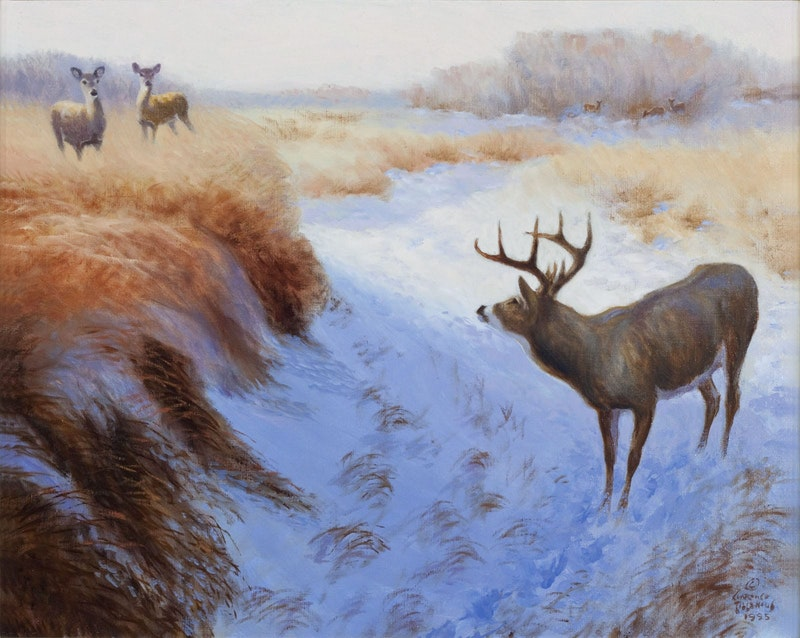 White Tailed Deer in the Snowy Marsh