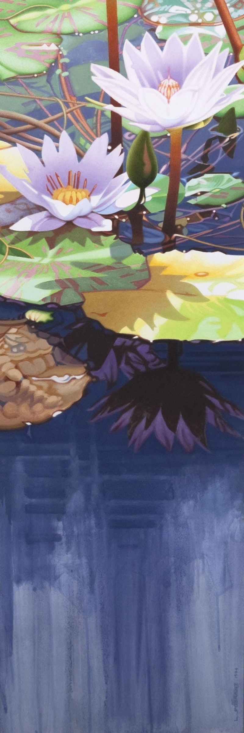 Two Waterlilies Image 1