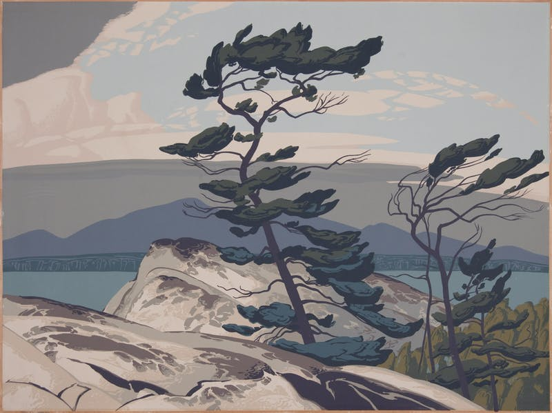 White Pine Image 1