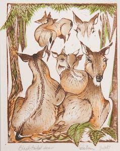 Black-Tailed Deer