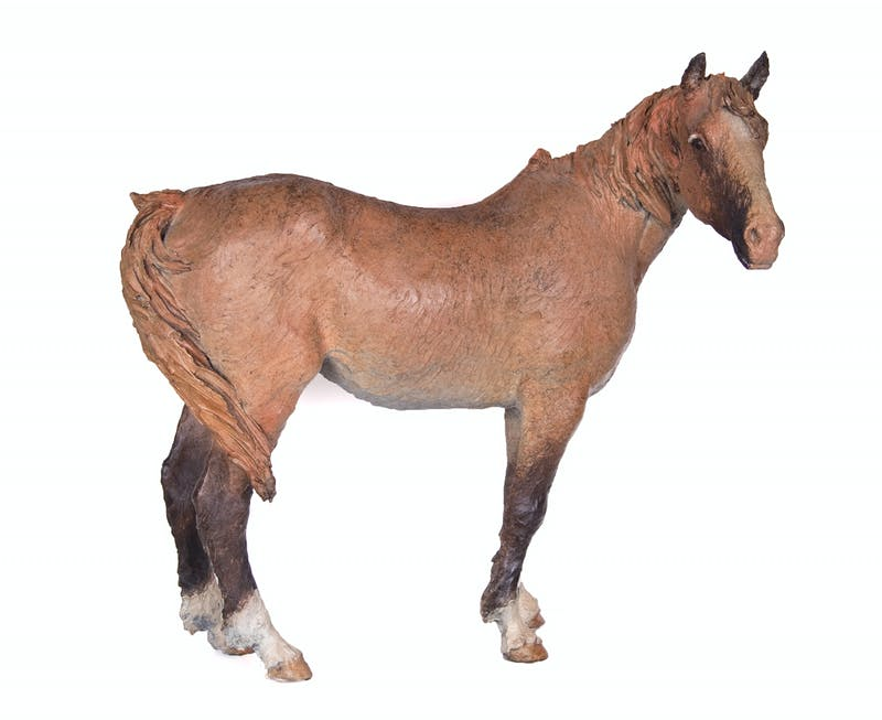 Le Pony Image 1