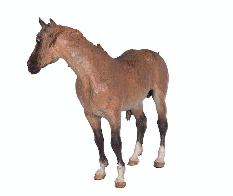 Le Pony Image 3