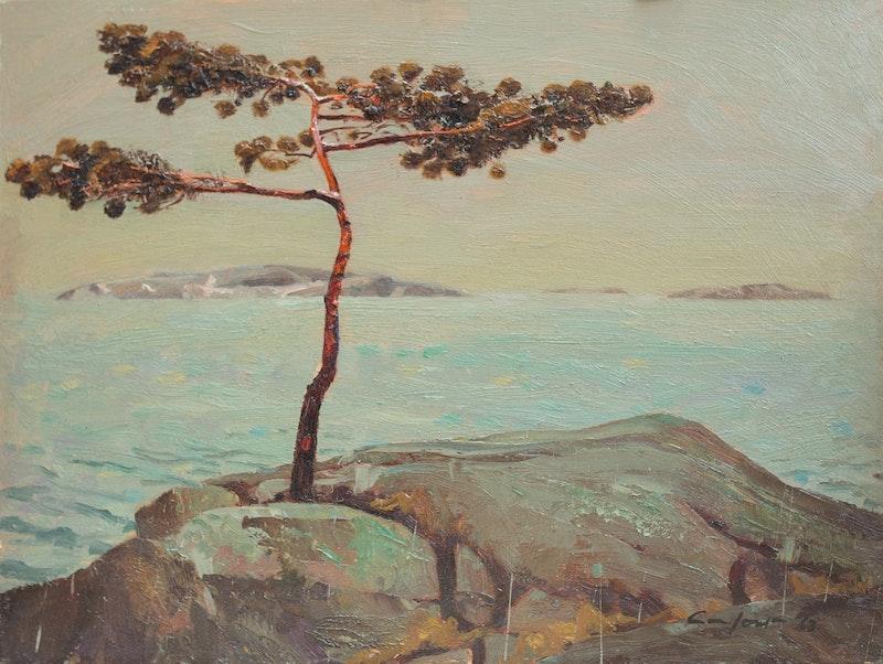 A.Y.'s Tree, Georgian Bay Image 3