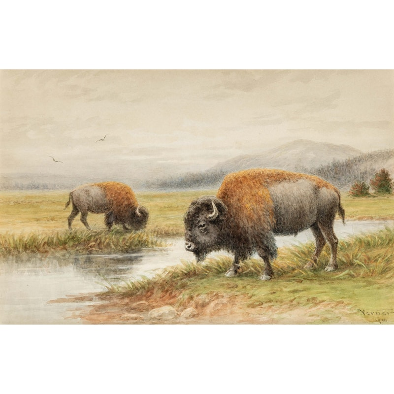 Buffalo By The River Image 2