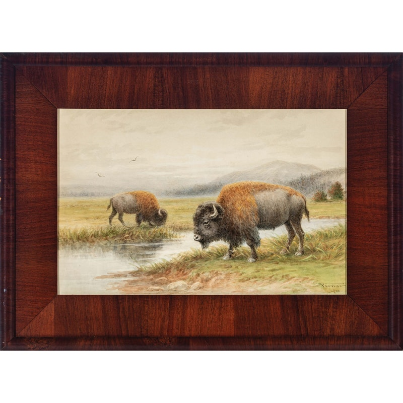 Buffalo By The River Image 3