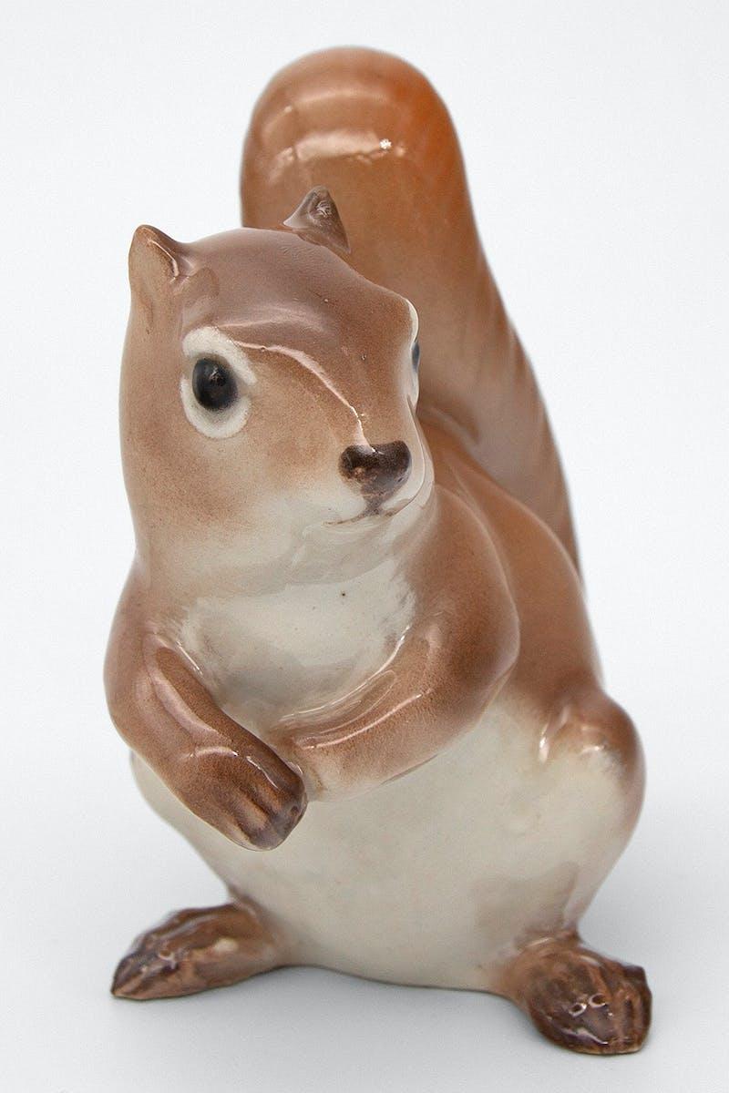 Squirrel Image 2