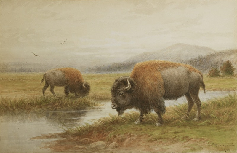 Buffalo By The River Image 1