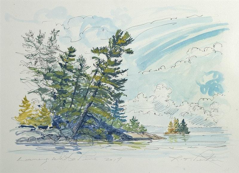 Leaning White Pine Image 1