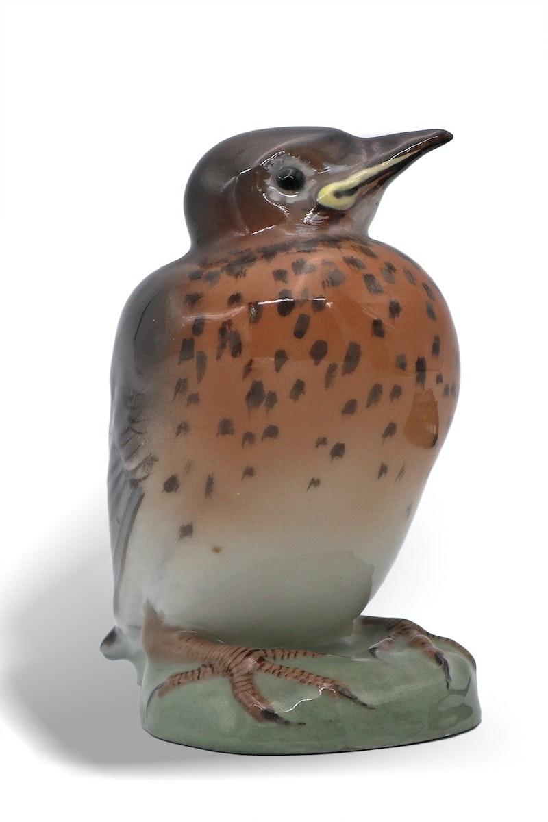 Robin Image 1