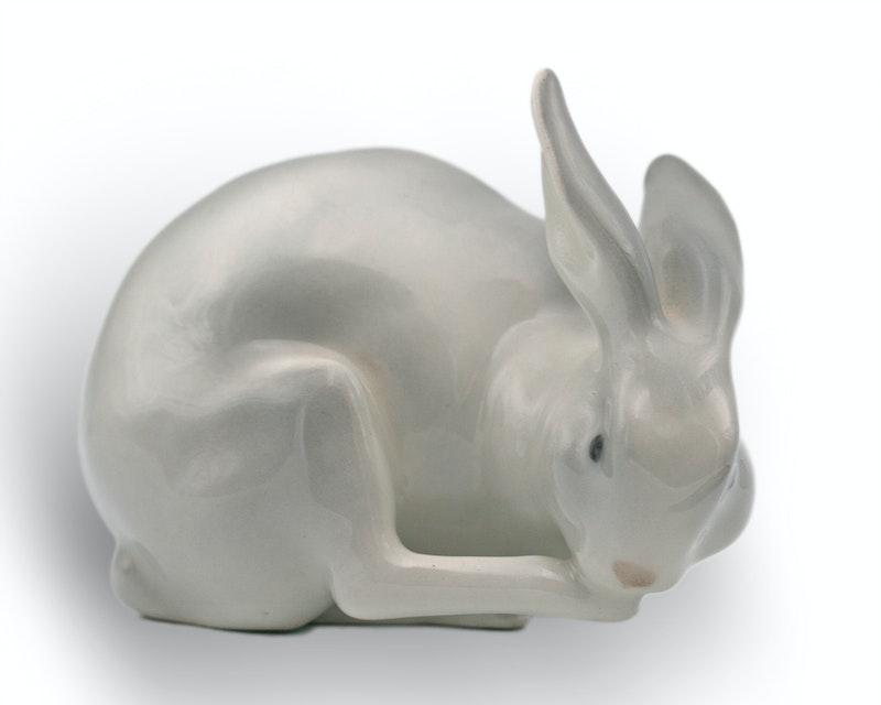 Rabbit Image 1