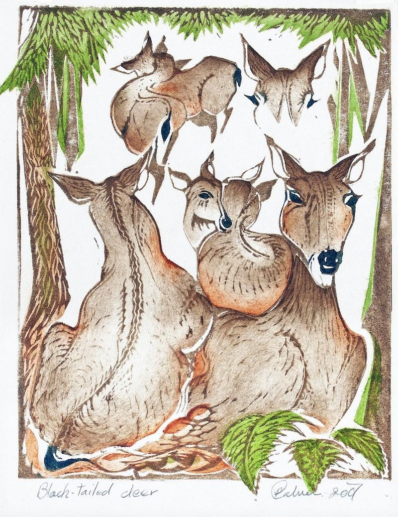 Black-Tailed Deer Image 1
