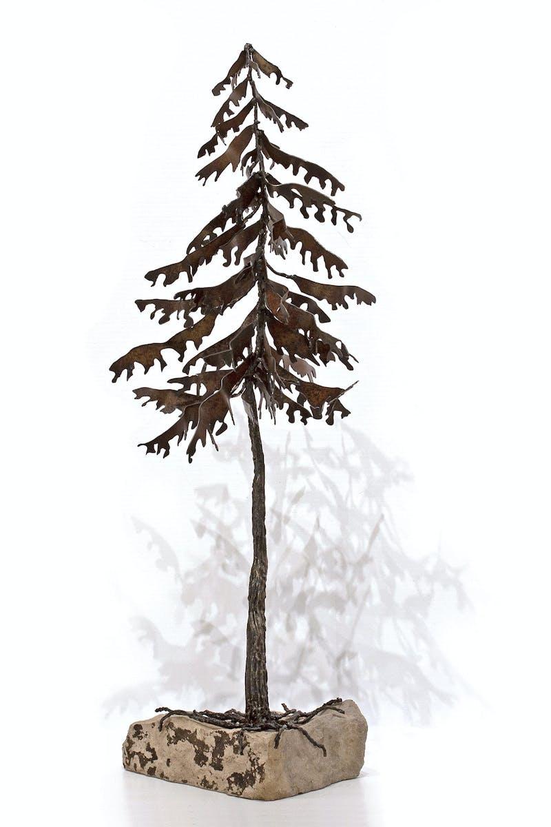 Pine in Rock #19-154