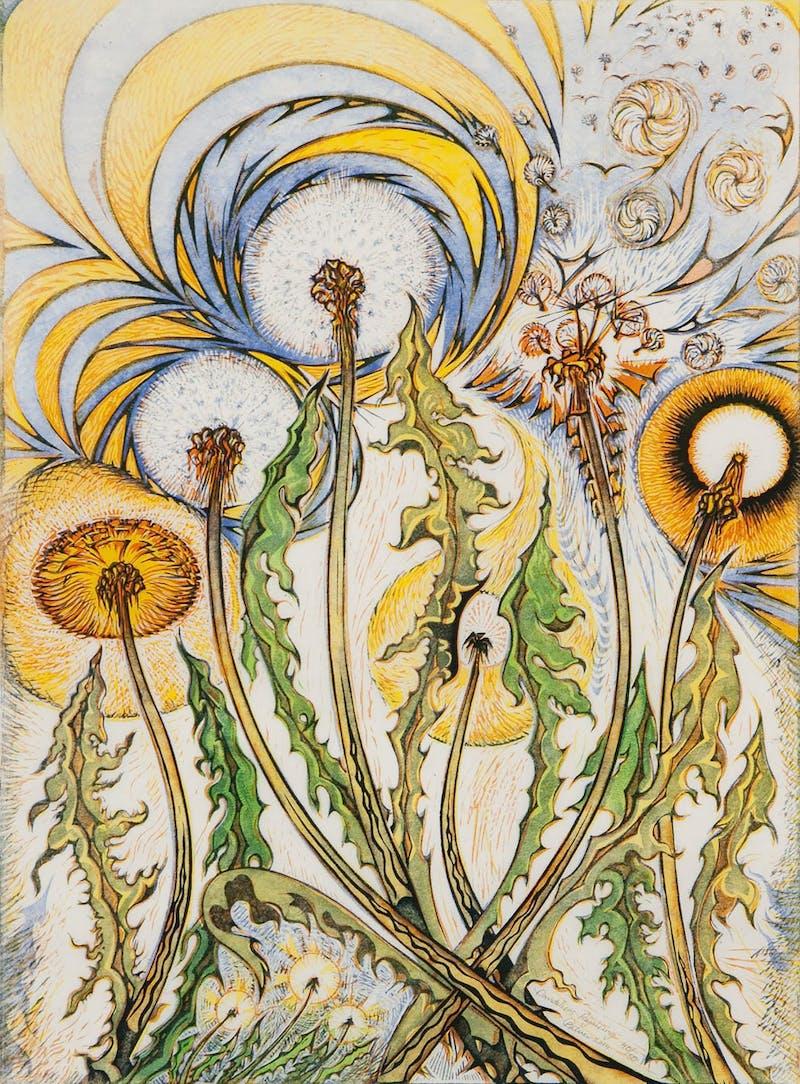 Dandelions Rejoicing 36/50 Image 1