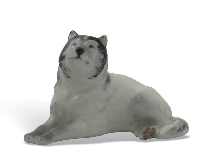 Husky Dog Image 1