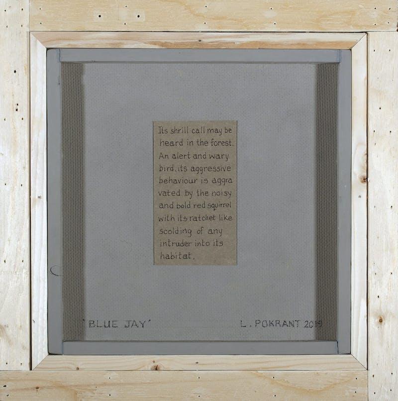 Blue Jay Image 2