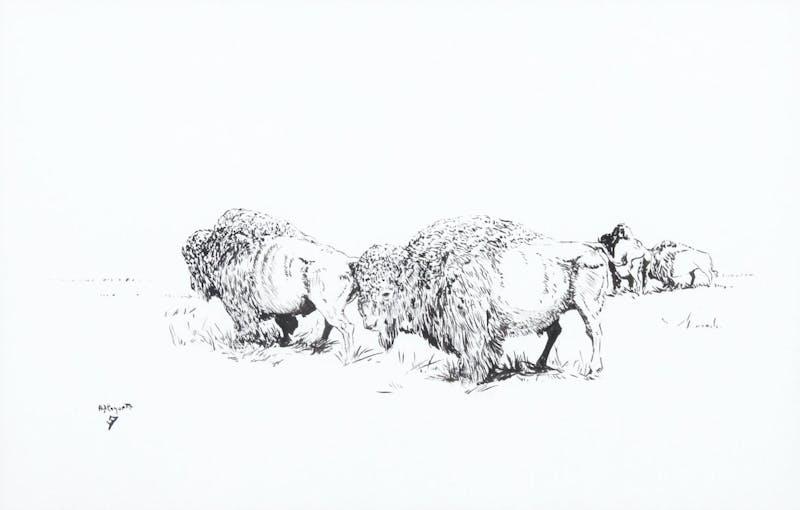 Buffalo 10/78 Image 1