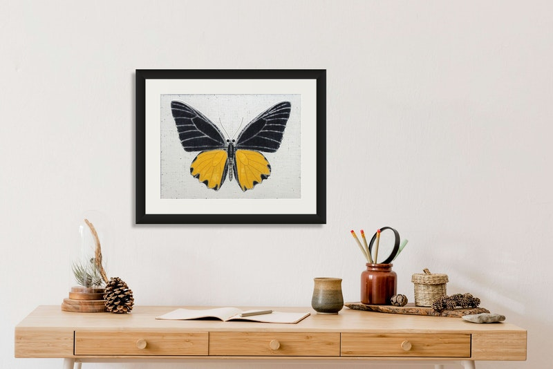 A Troides Butterfly Image 2